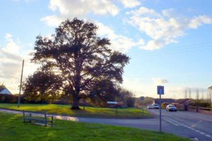 Lady Biggs tree - Lydlinch, Dorset