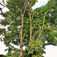 Utility Tree Work